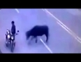 bull turns wild on road video
