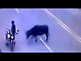 bull turns wild on road video videos