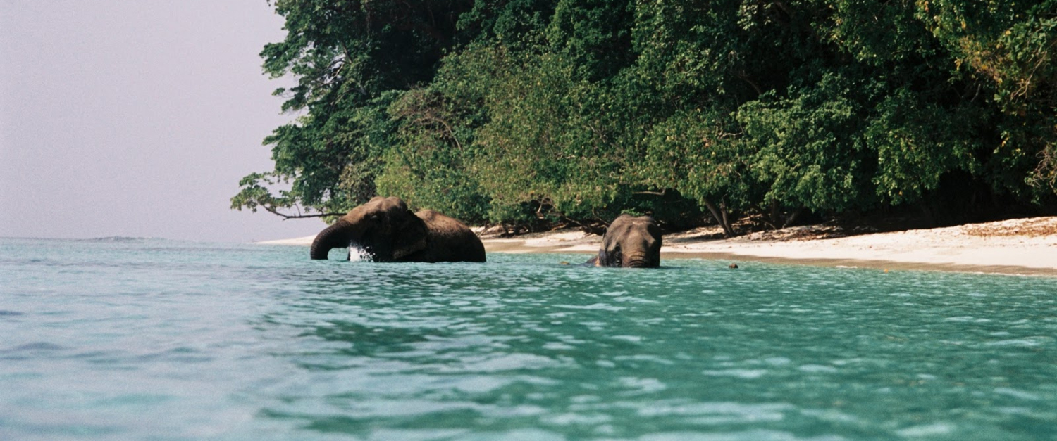 Andaman Tours And Travels