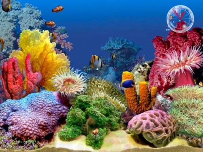 49x4ua367i508fq3.D.0.3D_Tropical_Fish_Aquarium_Scene_2_1